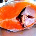 Photos: 鮭