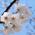 写真: 花咲