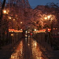 春雨降る夜桜 *b