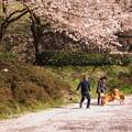 桜吹雪の下で、遊ぼっ♪