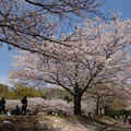 写真: 桜咲く公園でのひととき *b