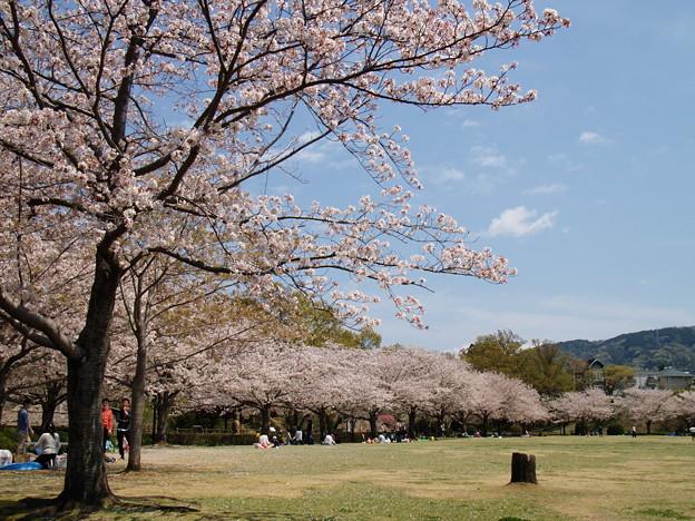 桜の下で寛ぐ休日 *b