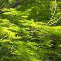 朝陽を浴びて靡く新緑