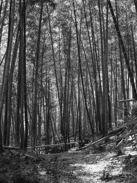 竹林に差し込む春の陽射し