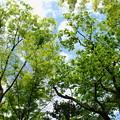 新緑眩い5月の青空