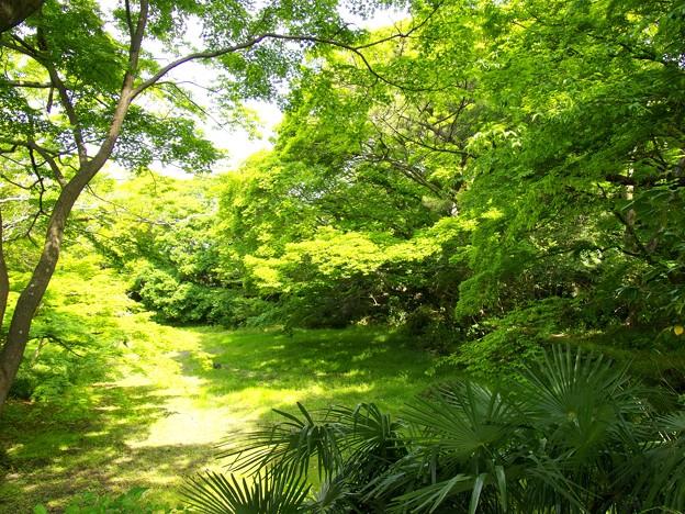 Photos: 新緑に覆われた小浜池