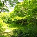 新緑に覆われた小浜池