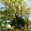写真: 木陰で寛ぐ