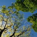 皐月の青空と新緑と