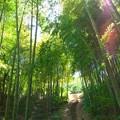 初夏の陽光が降り注ぐ竹林