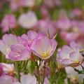 写真: 初夏の彩