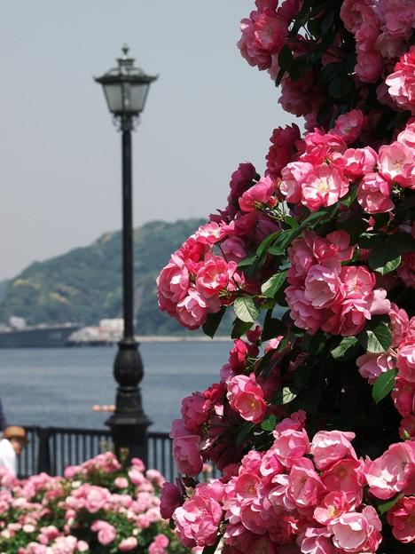 街灯と薔薇と港と