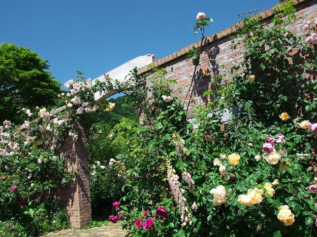 初夏の青空と薔薇の香りと