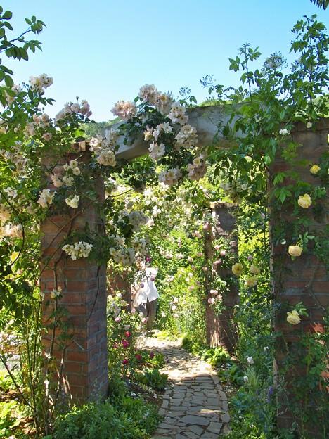 薔薇のアーチの向こう側