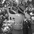 写真: 薔薇を写メする