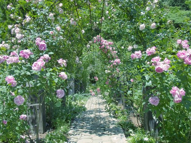 写真: 薔薇に囲まれた小径 *a
