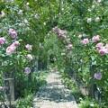 薔薇に囲まれた小径 *a