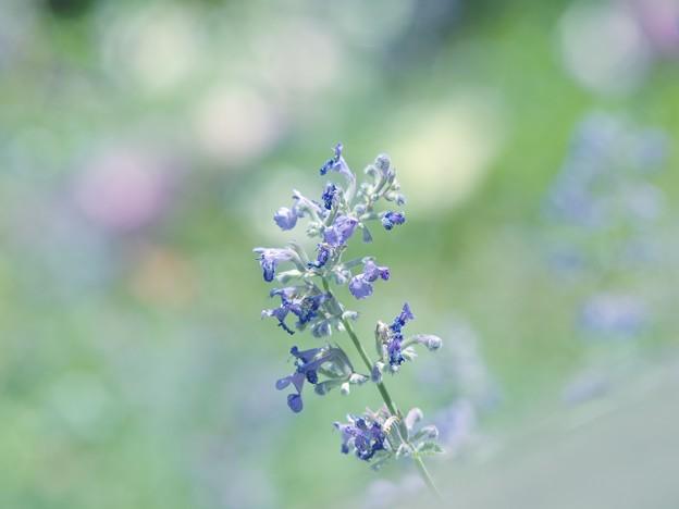 ガーデンの仄かな香り
