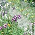 写真: ガーデンを彩る