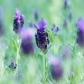 写真: ガーデンの香り