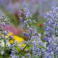 写真: 初夏の香り~ツイスト