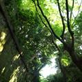 深緑に覆われた廃墟