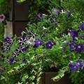 写真: お出迎え花壇 *b