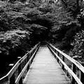 写真: 雨上がりの遊歩道 *b