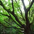 写真: 雨上がりの大樹に注ぐ陽光