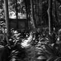 夏の林間の小径