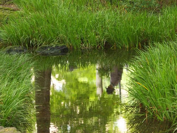 湧水面の虚像