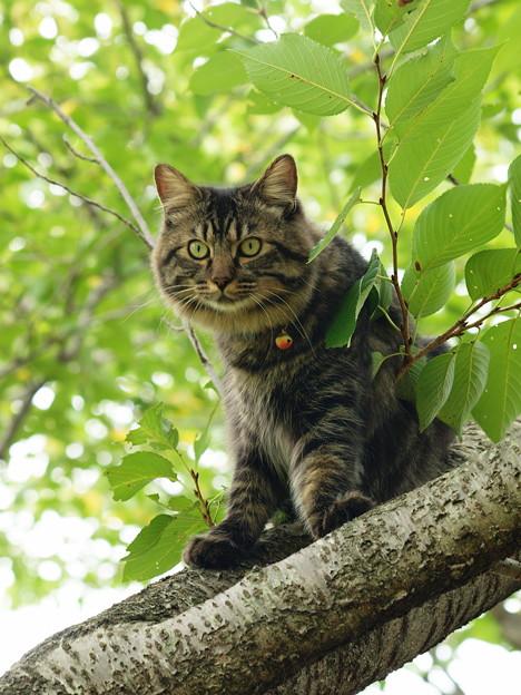 桜木の上から見下ろし