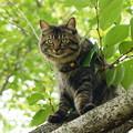 写真: 桜木の上から見下ろし