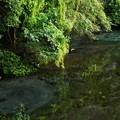 写真: 湧水の調べ~協奏
