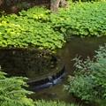 写真: 湧水流るる