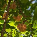 写真: 秋の旬、もうじき旬 *b