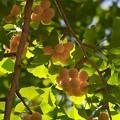 写真: 秋の旬、もうじき旬 *c