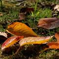 写真: 秋の使者
