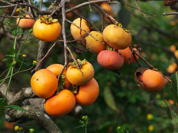 秋の旬、秋の果物 *c