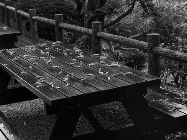 テーブルに避難した枯れ葉