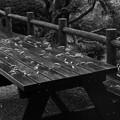 写真: テーブルに避難した枯れ葉