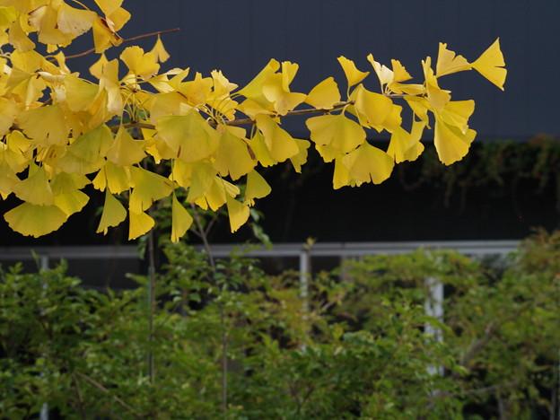秋色と緑葉と *b