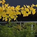 写真: 秋色と緑葉と *b