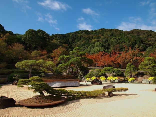 写真: 巨大盆栽と秋の青空
