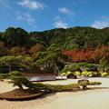 巨大盆栽と秋の青空