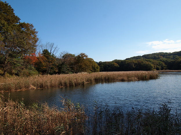 伊豆の瞳~一碧湖の秋 *c
