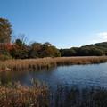 写真: 伊豆の瞳~一碧湖の秋 *c