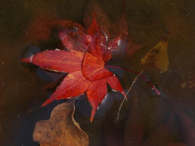 写真: 秋色に染まって水遊び *b