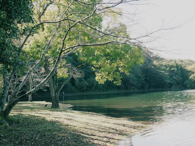 一碧湖の秋 *b