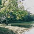 写真: 一碧湖の秋 *b